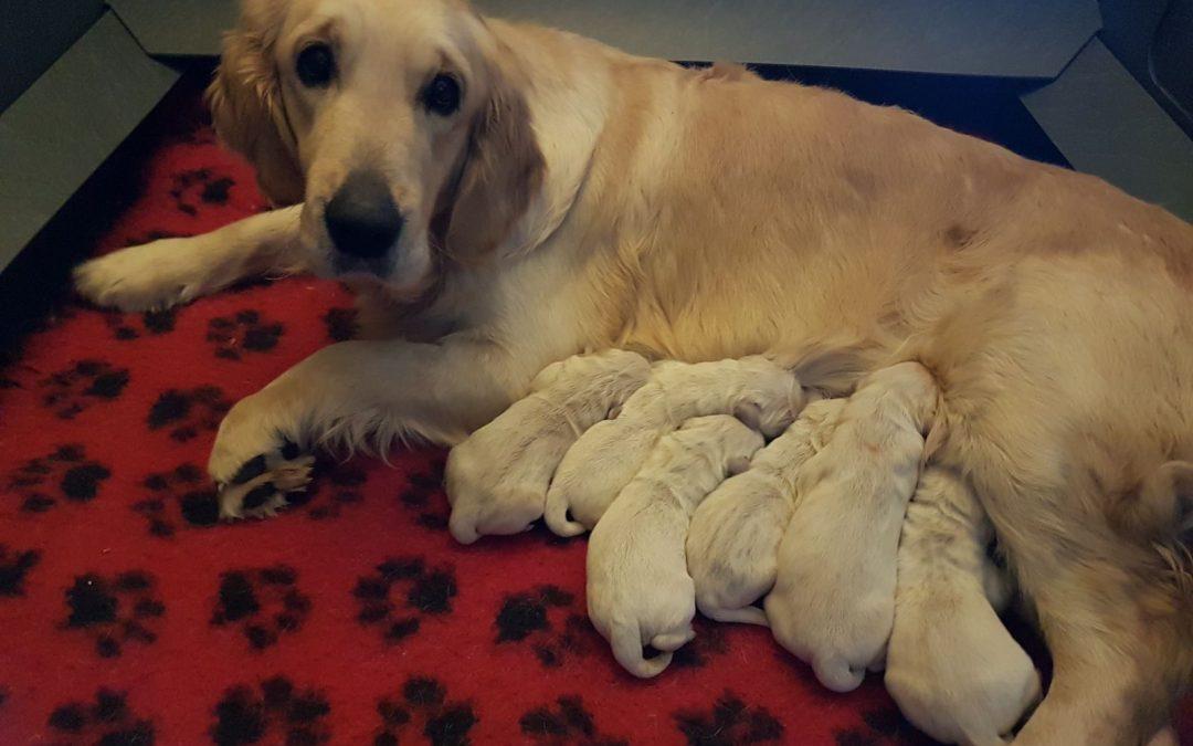 Sono nati i cuccioli di Jack e Ody!