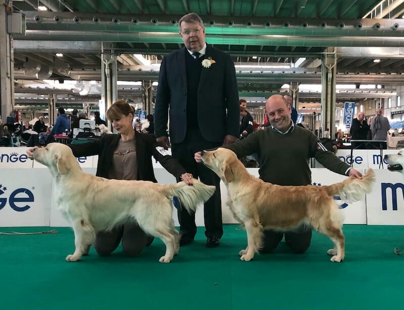 National dog show Bolzano 15.12.2018