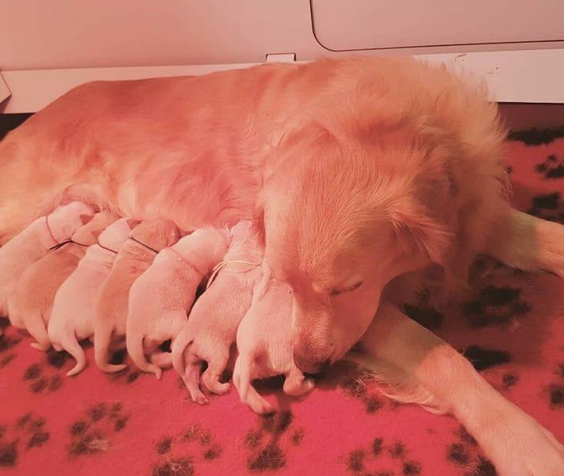 Sono nati i cuccioli di Holley e Jack!