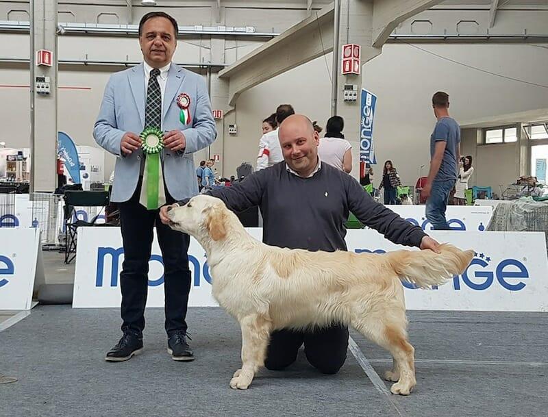 IDS Novara 29.4.2018 – Retriever Club Show