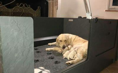 Sono nati i cuccioli di Olivia e Rain